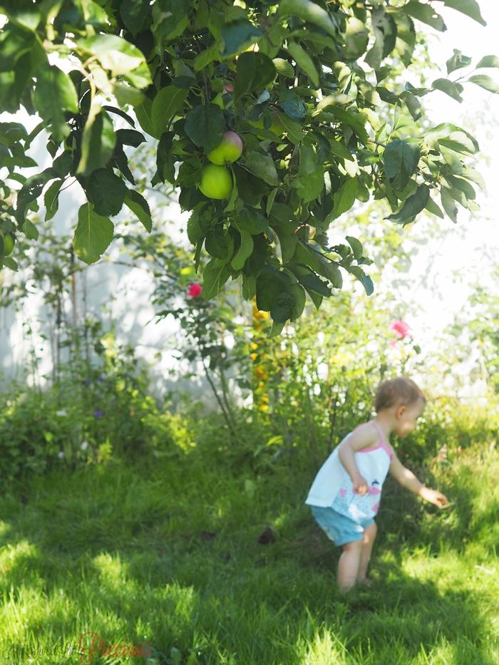 dziecko jabłka